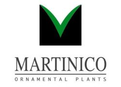 Martinico Plants